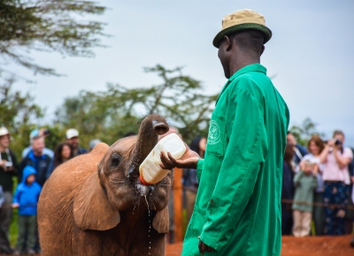 David Sheldrick - Caro Cools